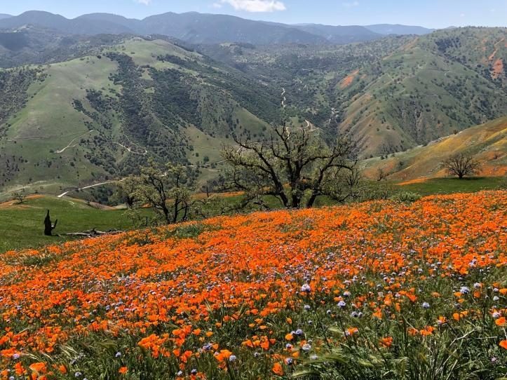 Tejon Ranch, CA